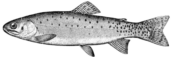 The Project Gutenberg eBook of Guide to the Study of Fishes